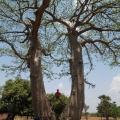 around-afrika-poubes-3
